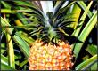 Jugo de Piña Naranja y Betabel para combatir la Anemia